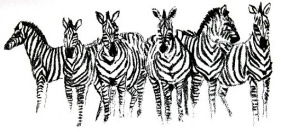 Zebras Pictures Copy Zebras Copy