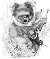 fundraising art - koala - katie dobson cundiff used in nonprofit strategic planning blog