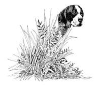 fundraising art - quail-pointer - katie dobson cundiff