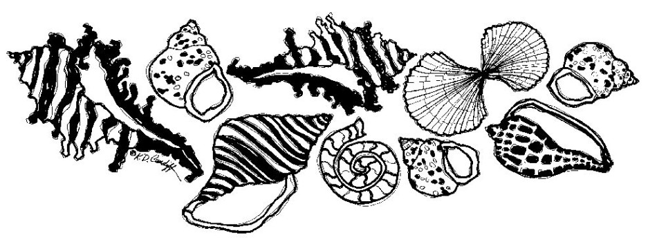 Fundraising art - sea shells - Katie Dobson Cundiff