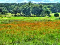 Flowers on Lands Conservancy Flowers